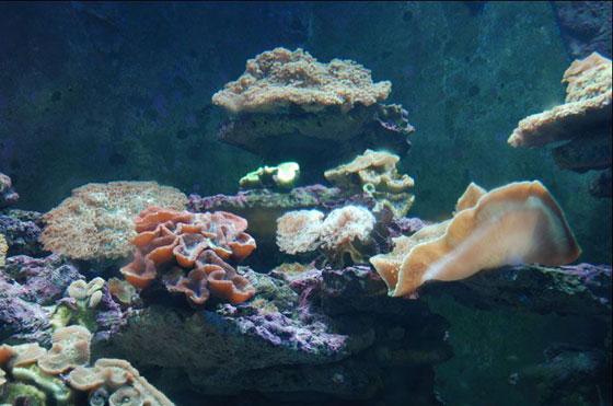 壁纸 海底 海底世界 海洋馆 水族馆 560_371