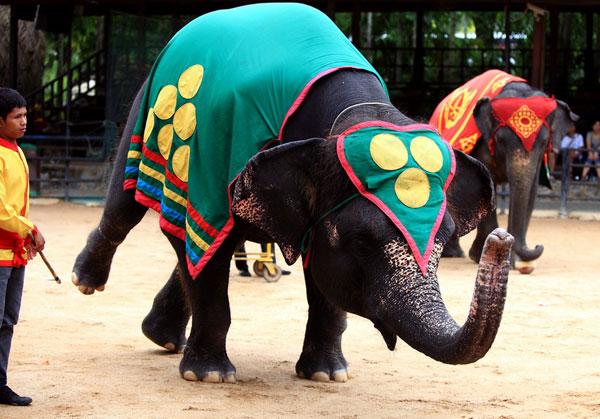 大象 动物 600_419