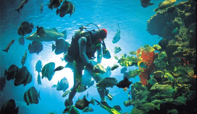 【超值三选一】——广州海洋馆,长隆水上乐园,宝墨园汽车三天(常规)