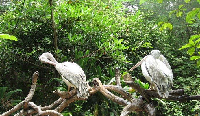 中国动物园海豚河豚