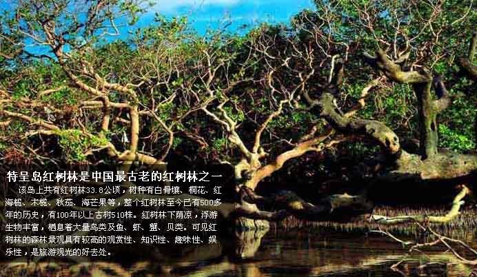 特呈现岛红树林