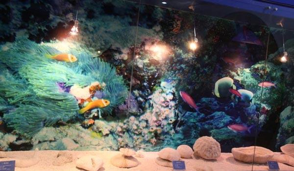 驻岛官兵动手创办的博物馆 西沙海洋博物馆
